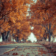 Road in autumn wood. Nature composition. — Stock Photo