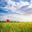 Poppies in a wheat field. Composition of nature — Stock Photo #37049909
