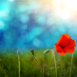 Poppies on defocused light green background — Stock Photo