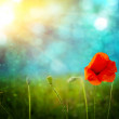 Stock Photo: Poppies on defocused light green background