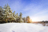 Winter landscape. Composition of nature. — Stock Photo