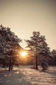 Paysage d'hiver. composition de la nature. — Photo