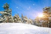 Paesaggio invernale. composizione della natura. — Foto Stock