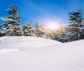 Winter landscape. Composition of nature. — Stock Photo