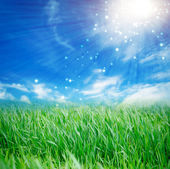 Fresh spring grass with drops on defocused light blue background — Stock Photo