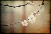 Blossoming branch on defocused light background. vintage image — Stock Photo