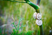 Snails in the grass — Стоковое фото