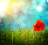 Poppies on defocused light green background — 图库照片