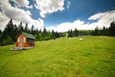 Green flower meadows in the Carpathian mountains — Stock Photo