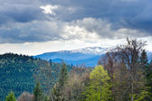 Beautiful view on mountains and meadows covered with forest — Stock Photo