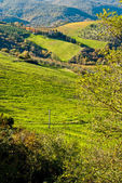 Tuscan countryside with cypresses, Italy — Stock Photo