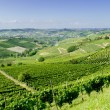 Langhe, hilly wine region in Piedmont, Italy — Stock Photo