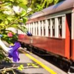 Kuranda Scenic Rail station, Queensland, Australia — Stock Photo #27627217