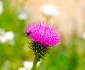 Fly on a pink flower — Stockfoto
