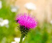 Podívejte se na růžový květ — Stock fotografie