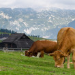Stock Photo: VelikPlanina, Slovenia