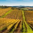 Tuscany, Chianti vignards — Stock Photo #34812771