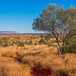 Australian bush (outback) — Stock Photo