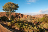 Landscape in the Australian outback — Stock Photo