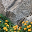 Flowers in front of rock - Stock Photo