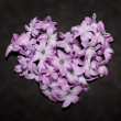 Heart made of hyacinths — Stock Photo