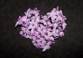 Heart made of hyacinths — Stock Photo