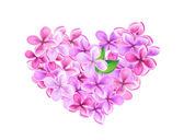 Heart made of lilacs — Stock Vector