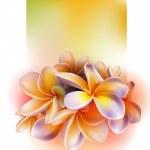 Frangipani flowers — Stock Vector