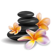 Spa concept zen stones and frangipani flowers — Stock Vector