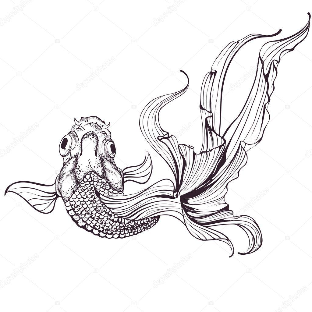 Croquis de poisson rouge sur fond blanc image - Croquis poisson ...