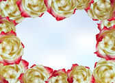 Frame made of tea roses — Stock Vector