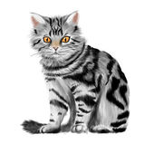 Vector illustration of sitting tabby kitten — Stock Vector