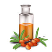 Sea buckthorn branch with berries and bottle of oil — 图库矢量图片