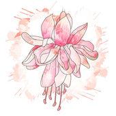 Fuchsia flower drawing — Stock Vector