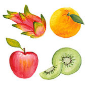 Apple, qiwi, orange and dragon fruit. Hand drawn in watercolor technique — Stock Vector