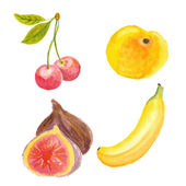 Cherries, apricot, figs and banana. Hand drawn in watercolor technique — Stock Vector