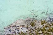 Betongvägg med mossa — Stockfoto