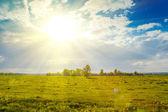 Sunny rural landscape — Stock Photo