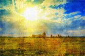 Sunny field — Stock Photo