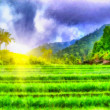 Stock Photo: Sunny field