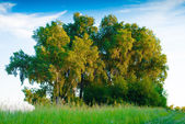 Peaceful summer rural landscape — Stock Photo