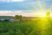 Beautiful sunset in green garden — Stock Photo