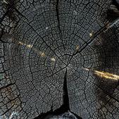 Structure en bois — Photo