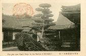 Pino plantado por shogun ashikaga. kinkaji templo en kyto, japón — Foto de Stock
