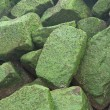 Background - stones covered by green sea grass — Stock Photo #18247797