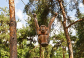 Wooden monkey sculpture in Dmitrov, Russia — Stock Photo
