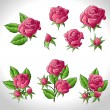 Royalty-Free Stock Imagem Vetorial: Big set of a beautiful colored roses. Vector illustration.