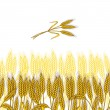 Background with ripe yellow wheat ears, vector illustration. — Stock Vector #12897173