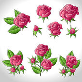 Big set of a beautiful colored roses. Vector illustration. — Stock Vector