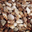 Tropical background with sea shells grunge texture. - Stock Photo